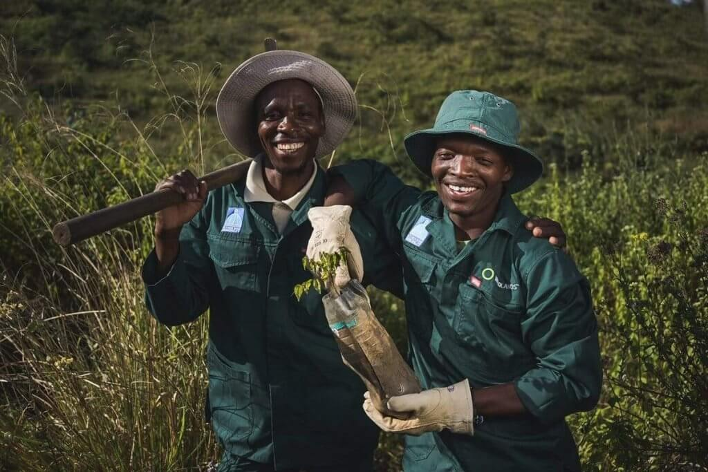 Trees Planted in South Africa
